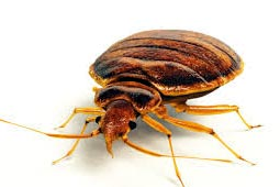 Bed Bugs Control West Delhi